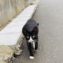 ご懐妊/子猫/野良クロちゃん/野良猫/猫 おはようございます。☁️ やっと雨あがり…