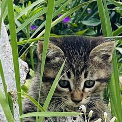 キジトラ/赤ちゃん/野良猫 こんばんわ🌙*.。  野良クロちゃんの赤…(1枚目)