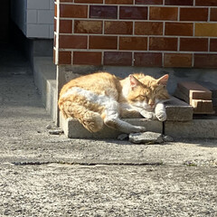 野良猫/猫 おはようございます。🌞  今日も暑くなり…