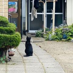 猫/野良クロちゃん/野良チャ君/野良猫 おはようございます。*(^o^)/*  …