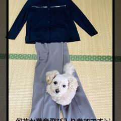 トイプー/トイプードル/犬/飛び入り参加/華音/パンツ/... こんにちはヽ(^0^)ノ  今日は母の日…(3枚目)