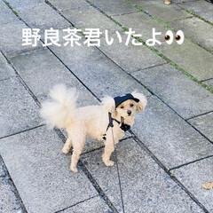 野良茶君/野良猫/散歩/華音/トイプー/トイプードル/... こんにちは🎶 今日は、湿度が63%気温2…
