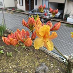 庭/花 こんにちはー☀︎  只今の気温20℃ 湿…