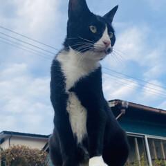 華音散歩/チビちゃん/野良クロちゃん/野良猫/猫 こんにちは🌞 晴れてきました🌞  華音散…