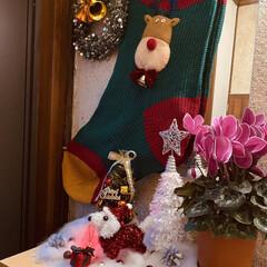 トイプー/トイプードル/犬/プレゼント/シクラメン/カノンタクロース/... おはようございます٩(*´꒳`*)۶ 今…(3枚目)