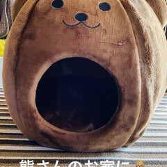 ベッド/熊さん/お家/冬用/トイプー/トイプードル/... おはようございます٩(*´꒳`*)۶ 華…(2枚目)
