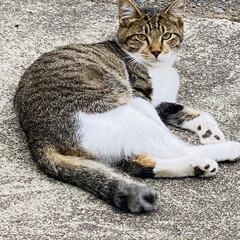 野良クロちゃんの子供達/野良猫/猫 こんにちは🎶 曇りです。最高気温19℃台…