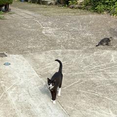 子猫/猫/野良クロちゃん/野良猫 こんにちは🎶 薄曇り気温24℃湿度97%…
