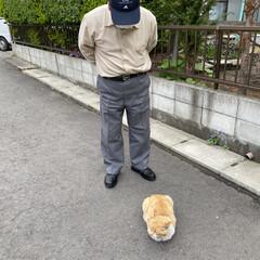 野良チャ/野良猫/ねこ 野良チャ君捜索しました。(・ω・ = ・…(5枚目)