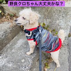 キズ/階段/野良猫/野良クロちゃん/猫/犬/... こんにちはヽ(^0^)ノ  華音散歩🐾 …(7枚目)