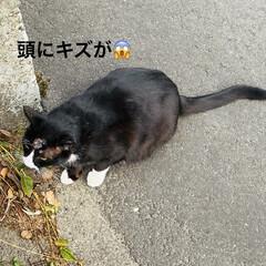 キズ/階段/野良猫/野良クロちゃん/猫/犬/... こんにちはヽ(^0^)ノ  華音散歩🐾 …(2枚目)