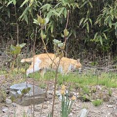 野良チャ/野良猫/ねこ 🐩の散歩中視線を感じて振り向くと、野良チ…(2枚目)