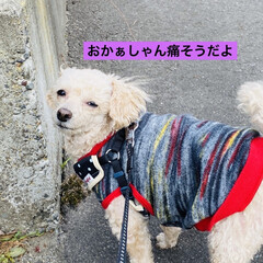 キズ/階段/野良猫/野良クロちゃん/猫/犬/... こんにちはヽ(^0^)ノ  華音散歩🐾 …(5枚目)