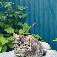 キジトラ/赤ちゃん/野良猫 こんばんわ🌙*.。  野良クロちゃんの赤…(5枚目)
