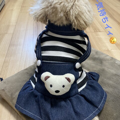 マイナス11℃/暖/ストーブ/トイプー/トイプードル/犬/... おはようございます☀️ 心配していた積雪…