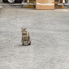 野良猫/とらちゃん/トイプー/トイプードル/野良チャ君/猫 こんにちは🎶 雨が降りそうです☔  華音…
