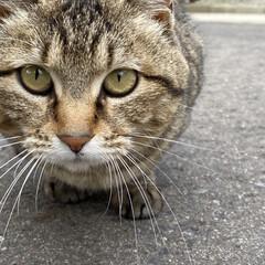 野良チャ/野良猫/ねこ 野良チャ君捜索しました。(・ω・ = ・…(6枚目)