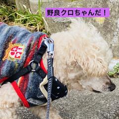 キズ/階段/野良猫/野良クロちゃん/猫/犬/... こんにちはヽ(^0^)ノ  華音散歩🐾 …(1枚目)