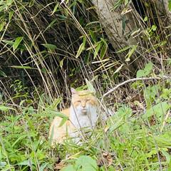 野良チャ/野良猫/ねこ 🐩の散歩中視線を感じて振り向くと、野良チ…