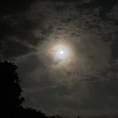 コーンムーン/満月/月 こんばんは🌃 今日は満月、コーンムーン🌕…