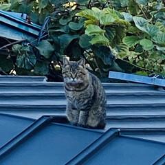屋根の上/喧嘩/野良クロちゃん/トラちゃん/野良猫/猫 おはようございます。🎶 朝は3℃と冷えま…