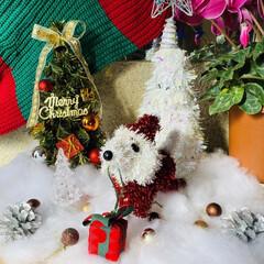 トイプー/トイプードル/犬/プレゼント/シクラメン/カノンタクロース/... おはようございます٩(*´꒳`*)۶ 今…(6枚目)