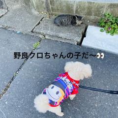野良クロちゃんの子/野良猫/猫/散歩/トイプー/トイプードル/... こんにちは🎶 風が冷たいです💦 最高気温…