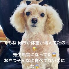 犬/検査/胆嚢/トイプー/トイプードル/病院/... こんばんは🌃 台風の影響て朝から土砂降り…(2枚目)