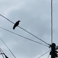 飛行/子育て/鳥/カラス こんにちは🎶 朝方までの雨もあがり、ムシ…(2枚目)
