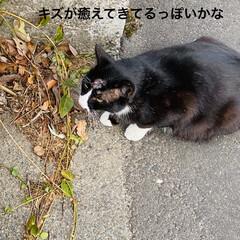 キズ/階段/野良猫/野良クロちゃん/猫/犬/... こんにちはヽ(^0^)ノ  華音散歩🐾 …(3枚目)