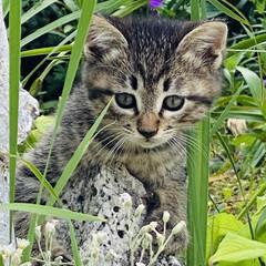 キジトラ/赤ちゃん/野良猫 こんばんわ🌙*.。  野良クロちゃんの赤…(3枚目)