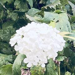 木/華音/散歩/花 おはようございます。🎶 今日は朝から太陽…