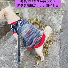 キズ/階段/野良猫/野良クロちゃん/猫/犬/... こんにちはヽ(^0^)ノ  華音散歩🐾 …(8枚目)