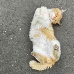 野良チャ/野良猫/ねこ 野良チャ君捜索しました。(・ω・ = ・…(4枚目)