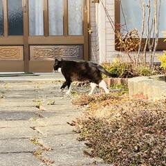 キズ/階段/野良猫/野良クロちゃん/猫/犬/... こんにちはヽ(^0^)ノ  華音散歩🐾 …(6枚目)