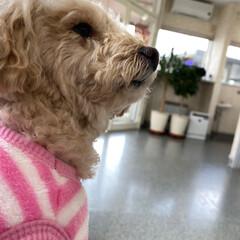 ピンク 診察の順番待ち