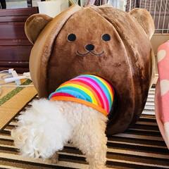 ベッド/熊さん/お家/冬用/トイプー/トイプードル/... おはようございます٩(*´꒳`*)۶ 華…(4枚目)