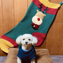 犬/飾る/トイプードル/トイプー/華音/🍘/... こんにちは🌞 風が冷たいですが、晴れてま…