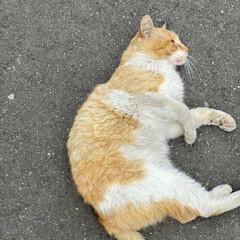 野良チャ/野良猫/ねこ 野良チャ君捜索しました。(・ω・ = ・…(3枚目)