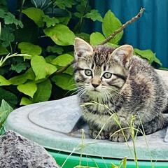 キジトラ/赤ちゃん/野良猫 こんばんわ🌙*.。  野良クロちゃんの赤…(4枚目)