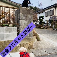 子猫/新顔/野良クロちゃん/野良猫/猫/トイプー/... こんにちは🌞 お天気E〜ですが、強風です…