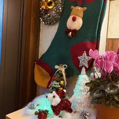 トイプー/トイプードル/犬/プレゼント/シクラメン/カノンタクロース/... おはようございます٩(*´꒳`*)۶ 今…(4枚目)