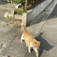 野良チャ君/野良猫/猫 夕方野良チャ君に遭遇。👀  いつものおじ…
