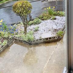 雪/あられ/雨/寒い おはようございます٩(*´꒳`*)۶  …(1枚目)