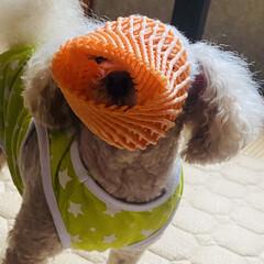 お気に入り/被る/すっぽり/帽子/🍘/資源ゴミ/... こんにちは🎶 雨です☂️気温18℃寒いで…