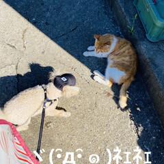 野良茶君/野良猫/散歩/華音/トイプー/トイプードル/... こんにちは🎶 今日は、湿度が63%気温2…(4枚目)
