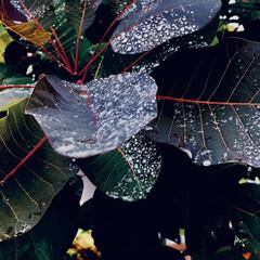 雨の雫/近所/散歩/雨 こんにちは🎶 朝から雨、霧雨☂️気温18…(1枚目)