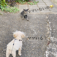 ケガ/野良クロちゃん子供たち/野良クロちゃん/野良猫/散歩/トイプードル/... おはようございます。🎶 天気急変しそうな…
