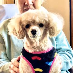 アニマルセラピー/91歳/お家/おばあちゃん 今日も天気悪いし寒いです。😞  🐩とおば…