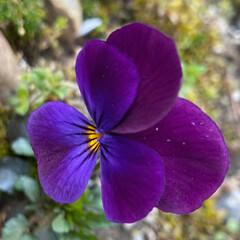 発見 我が家の庭にはない花が咲きました。❁✿✾…